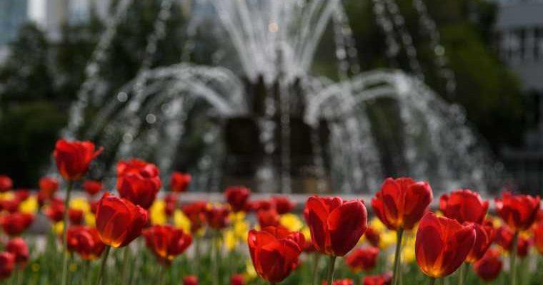 коронавирус ученые исследование распространение жара лето погода температура