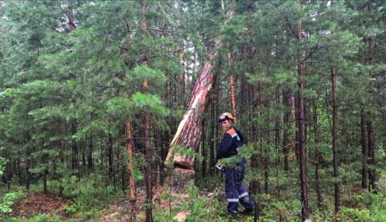 Ветер выдрал деревья и снес лагерь туристов в Красноярском крае. Есть погибшие. ФОТО