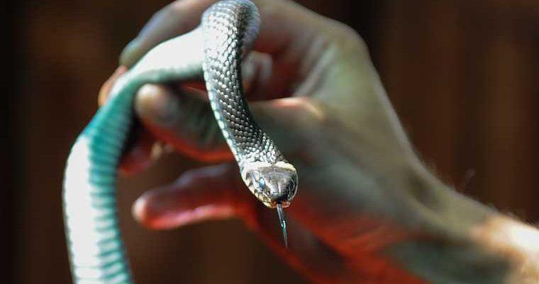 Тюменец выпутил змею в центре города