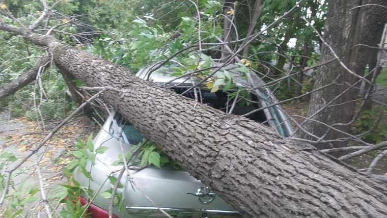 В Екатеринбурге ураган уронил столб на человека. Ветер валит деревья и заборы. ФОТО. ВИДЕО
