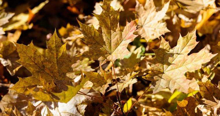 глобальное потепление климатолог осень погодные аномалии