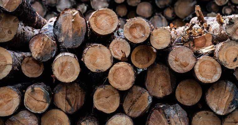 добыча леса