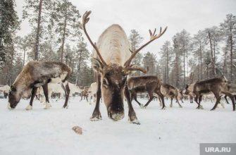 институт экологии растений и животных УрО РАН