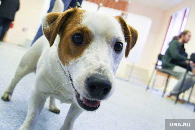 Госдума запретила забирать у россиян домашних животных за долги