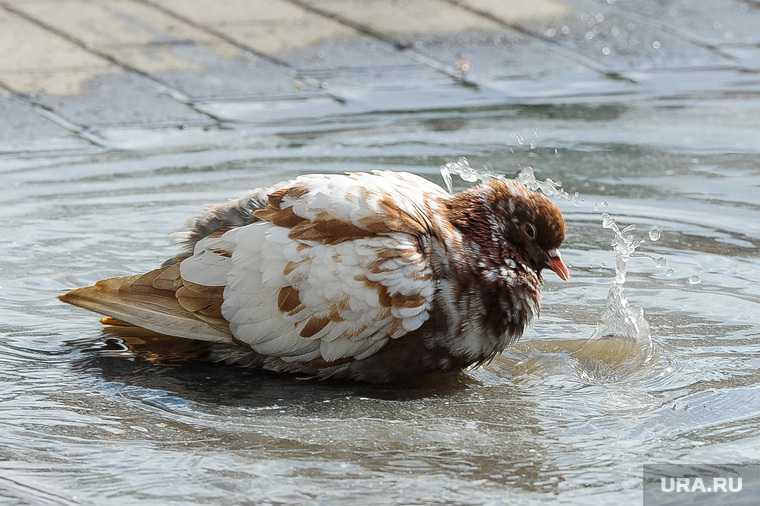 Челябинск погода весна дождь ветер заморозки