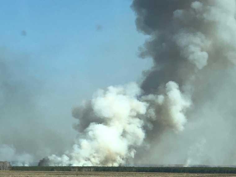 Лес загорелся в Курганской области. Фото