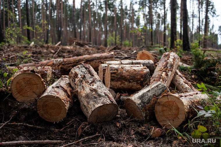 ЯНАО трасса Салехард Надым восстановление деревьев