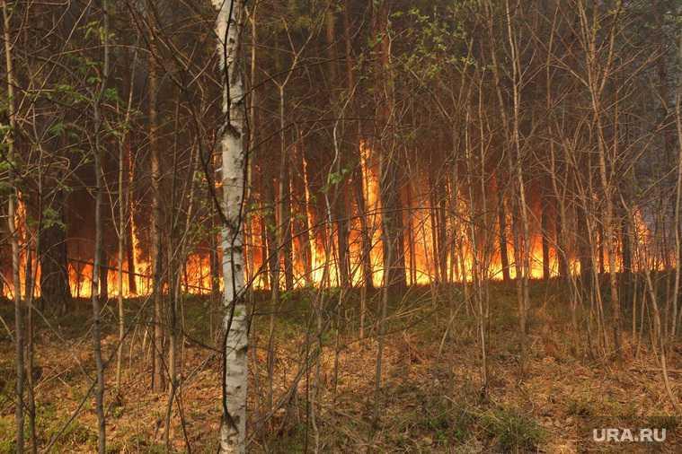 в Тюмени продолжаются лесные пожары