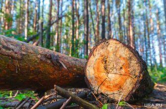 Козицын лес тура
