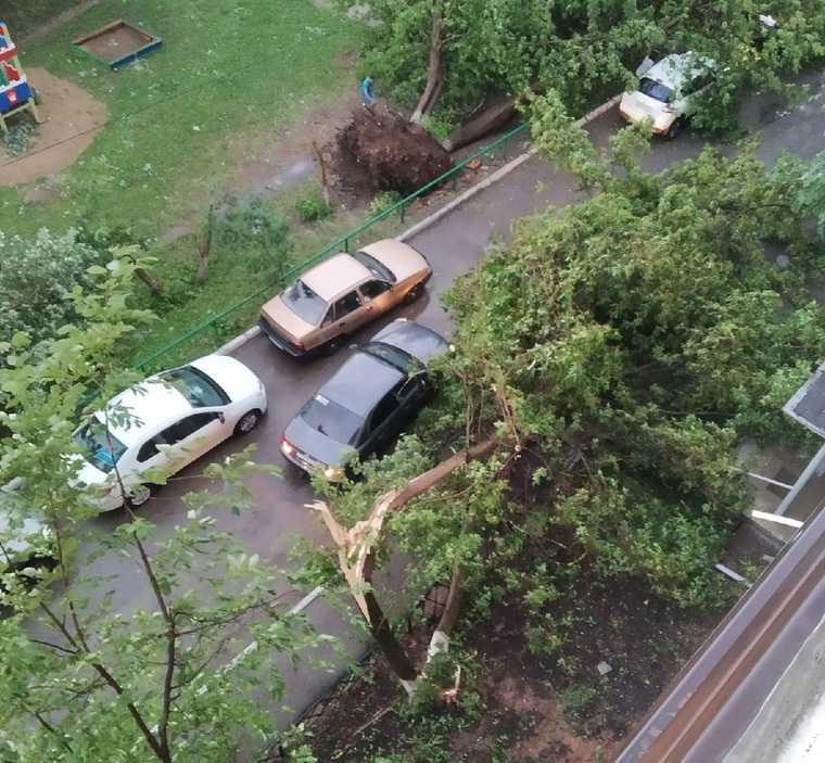 В Пермском крае после грозы повалены деревья и разбиты машины. Фото